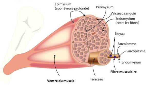 image pour catégorie les nerfs f91872aa061